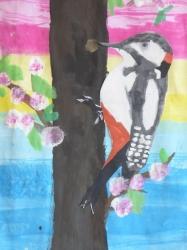 Unsere bunte Vogelwelt_7