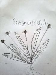 Spitzwegerich_6